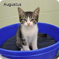 Adopt A Pet :: Augustus - Slidell, LA