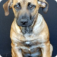 Adopt A Pet :: Ruby - Newland, NC