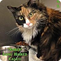 Adopt A Pet :: T-2 Amber - Triadelphia, WV