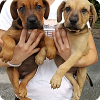 Adopt A Pet :: Pixie & Precious - Key Largo, FL