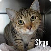 Adopt A Pet :: Skye - Merrifield, VA