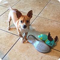 Adopt A Pet :: Thomas - San Antonio, TX