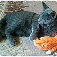 Adopt A Pet :: Clark Kent - St. Louis, MO