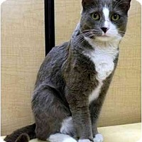 Adopt A Pet :: Calvin - Irvine, CA