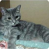 Adopt A Pet :: Priscilla - Sterling Hgts, MI