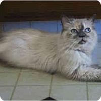 Adopt A Pet :: Princess Leia - Davis, CA