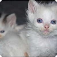 Adopt A Pet :: Louie - Xenia, OH