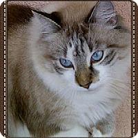 Adopt A Pet :: Apollo - Bradenton, FL