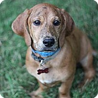 Adopt A Pet :: Alba (photolink) - Richmond, VA