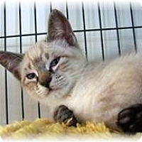 Adopt A Pet :: Lee - Shelton, WA