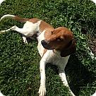 Adopt A Pet :: Alexia