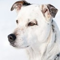 Adopt A Pet :: Brewster - High River, AB