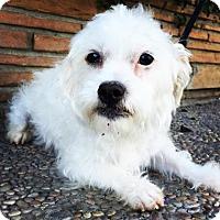 Adopt A Pet :: Cuddlebug - Santa Cruz, CA