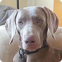 Adopt A Pet :: Kip - Grand Haven, MI