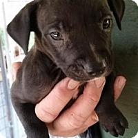 Adopt A Pet :: Ghost - Gainesville, FL