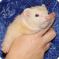 Adopt A Pet :: Jupiter - Navarre, FL