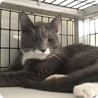 Adopt A Pet :: Dimitri - Tucson, AZ