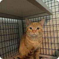Adopt A Pet :: Seamore - Springfield, VA