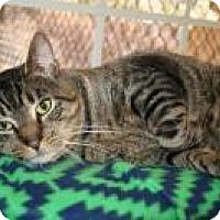 Adopt A Pet :: Higgins - Manchester, CT