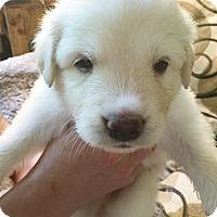 Adopt A Pet :: Attwell - Kyle, TX