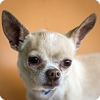 Adopt A Pet :: Peanut Butter - Berkeley, CA