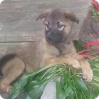 Adopt A Pet :: Tiny - Valparaiso, IN