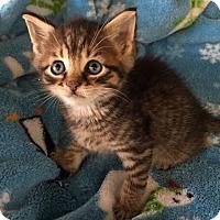 Adopt A Pet :: Hercules - Island Park, NY