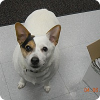 Adopt A Pet :: PATCHES - Sandusky, OH