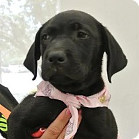 Adopt A Pet :: Bee - Austin, TX