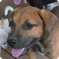 Adopt A Pet :: Shirley - Tonopah, AZ