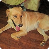 Adopt A Pet :: MARLEY - Lincolndale, NY