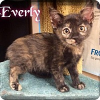 Adopt A Pet :: Everly - 489 / 2016 - Maumelle, AR