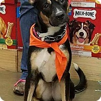 Adopt A Pet :: Mercury - Akron, OH