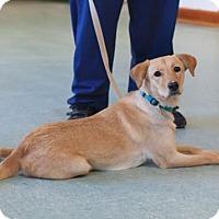 Adopt A Pet :: Libby - Bellbrook, OH