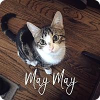 Adopt A Pet :: Mayflower - Arlington/Ft Worth, TX