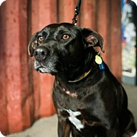 Adopt A Pet :: Charlize Theron - Brooklyn, NY