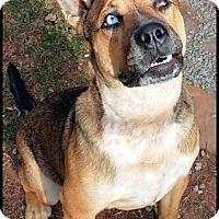 Adopt A Pet :: Luke - Petersburg, VA