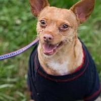 Adopt A Pet :: Andy - Santa Fe, TX