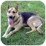 Photo 1 - German Shepherd Dog Dog for adoption in Pike Road, Alabama - Trinka