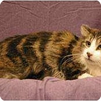 Adopt A Pet :: Trumpet - Sacramento, CA