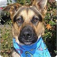 Adopt A Pet :: Kobuk - Alexandria, VA