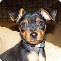 Adopt A Pet :: Babay Maya - Marlton, NJ