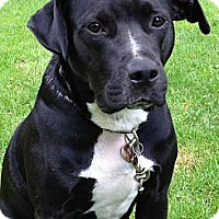 Adopt A Pet :: George - Elyria, OH