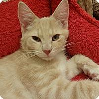 Adopt A Pet :: Boomer - Colmar, PA