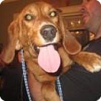 Adopt A Pet :: Quinn - Minneapolis, MN