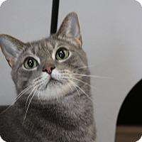 Adopt A Pet :: Arrow - Sarasota, FL