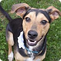 Adopt A Pet :: Delta - Knoxville, TN