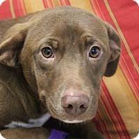 Adopt A Pet :: Jasmine - Bedford, TX