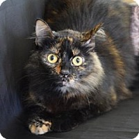 Adopt A Pet :: Regina George - Bradenton, FL
