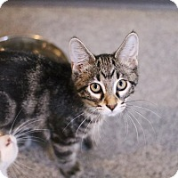 Adopt A Pet :: Little Mike - Lincoln, NE